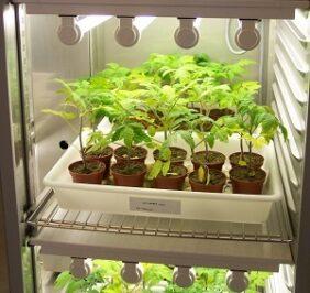 Växtodling